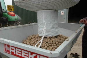 April - loading the potatoes