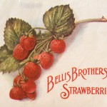 Strawberru Label