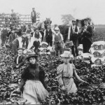 Strawberry Pickers
