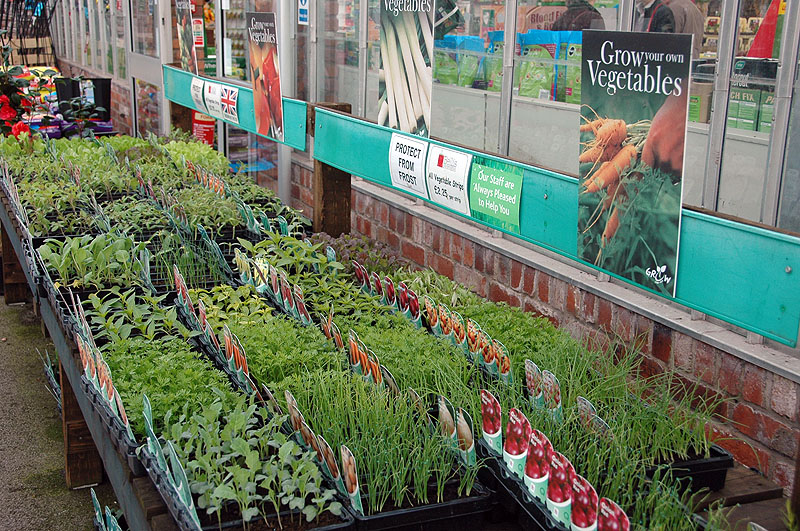 If you want to get a head start with your home grown vegetables  our wide  selection of vegetable plants are ideal  Forget about seed sowing and  propagation. Vegetable Plants   Bellis Brothers Farm Shop  Garden Centre and