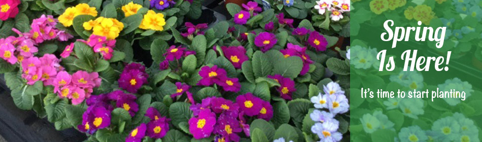 Bellis Brothers Farm Shop Garden Centre and Pick Your Own