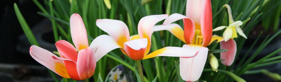 Bellis Brothers outdoor plants