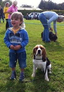 cute-beagle-2