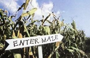 Maize-maze-large