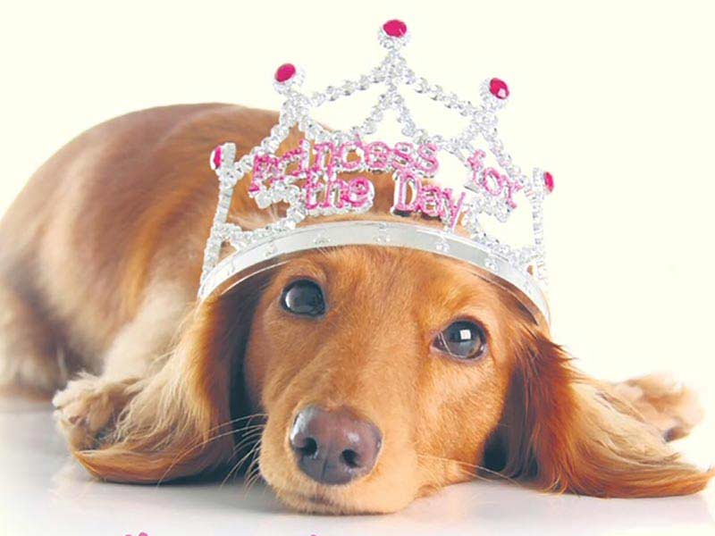 Companion Dog Show