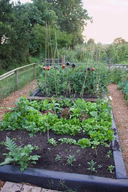 Holt Community Gardeners